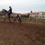 SENORITA, LUSITANO, 14, FALBE, AKTION GREMLIN, IN NOT!!